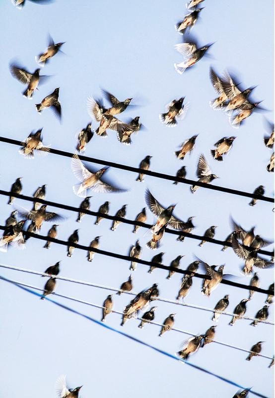 The Birds, Yoshinori Mizutani, Courtesy of Brownie Project (Shanghai), 2015. (Photo provided to chinadaily.com.cn)