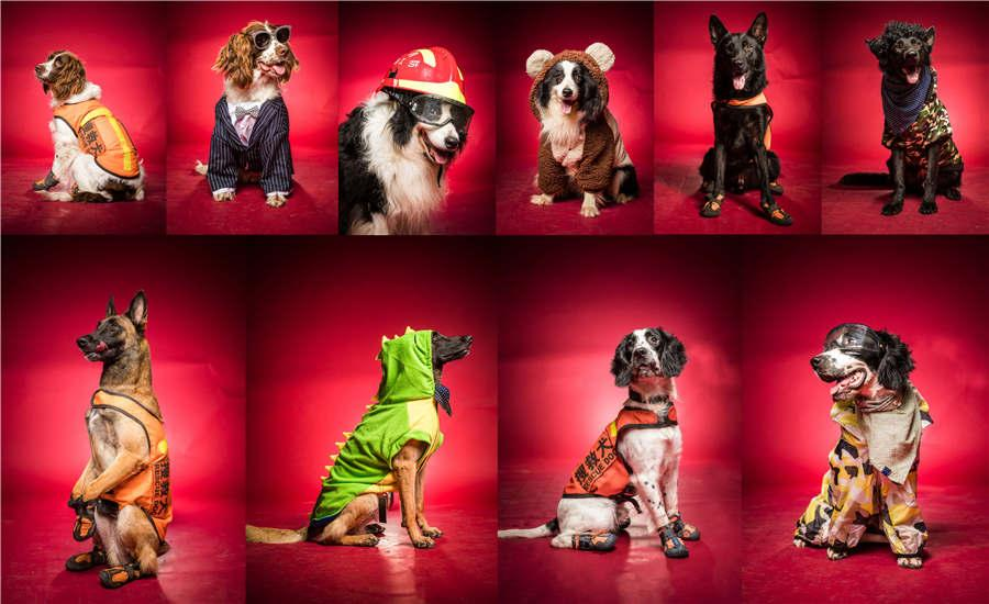 A combined photo of rescue dogs from a firefighting unit in Hangzhou. Trainers at a firefighting unit in Hangzhou, under China\'s Armed Police Force, dressed their rescue dogs in style on Wednesday in celebration of Army Day. (Photo/Asianewsphoto)