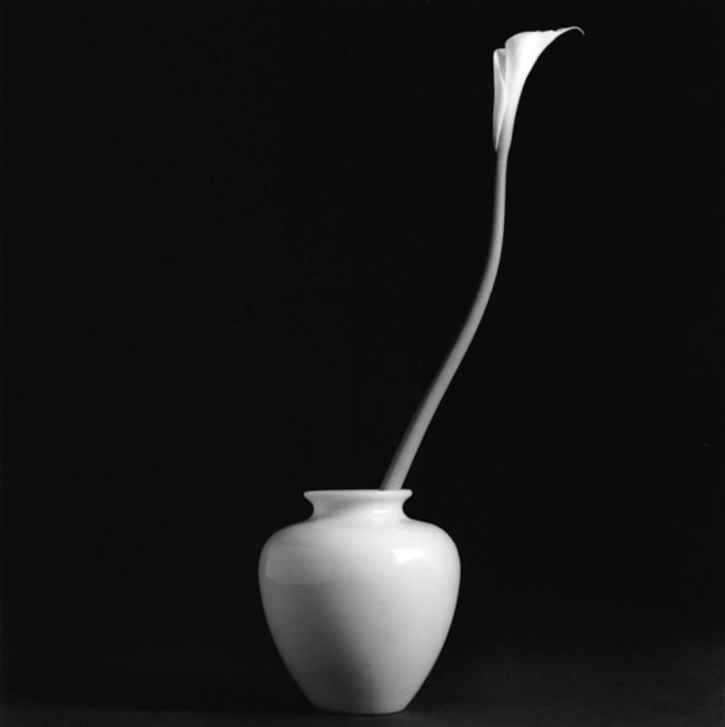 Calla Lily, Robert Mapplethorpe, courtesy of Galerie Thaddeaus Ropac (Paris, Salzburg and London), 1985.  (Photo provided to chinadaily.com.cn)
