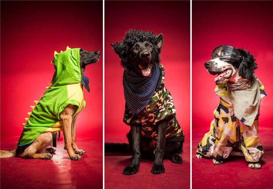 Rescue dogs Badao, Bahai and Kugou in fashionable clothes. (Photo/Asianewsphoto)