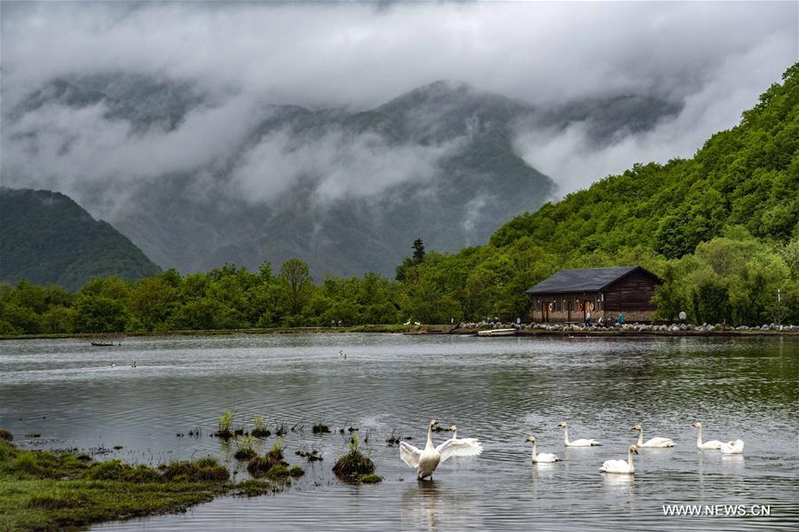 Photo taken on May 18, 2018 shows the scenery of Dajiuhu wetland in Shennongjia, central China\'s Hubei Province. (Xinhua/Du Huaju)