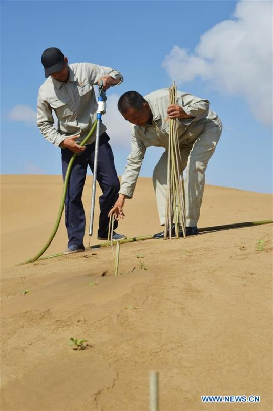 Staff members plant trees in sandy soil at the Kubuqi Desert in Jinghang Banner, north China\'s Inner Mongolia Autonomous Region, July 24, 2018. Kubuqi, the seventh largest desert in China, is a good example of China\'s success in alleviating desertification. About 6,460 square kilometers of the Kubuqi desert has been reclaimed in the last 30 years. (Xinhua/Zou Yu)