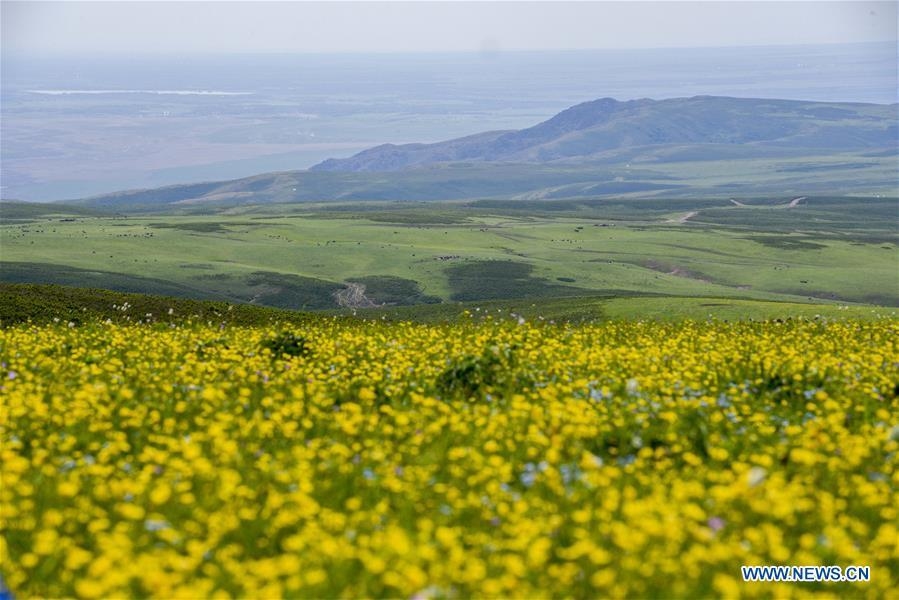 Photo taken on June 17, 2018 shows the view of a pasture in Emin County of Tacheng Prefecture, northwest China\'s Xinjiang Uygur Autonomous Region. China\'s westernmost Xinjiang Uygur Autonomous Region welcomed a record high of 107 million tourists in 2017, up 32.4 percent year on year. In addition, tourists spent over 182 billion yuan (28.4 billion U.S. dollars) in Xinjiang last year, 30 percent more than in 2016. (Xinhua/Hu Huhu)