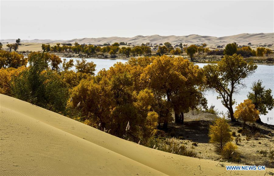 Photo taken on Oct. 21, 2017 shows desert poplars by the riverside downstream of Tarim River, northwest China\'s Xinjiang Uygur Autonomous Region. China\'s westernmost Xinjiang Uygur Autonomous Region welcomed a record high of 107 million tourists in 2017, up 32.4 percent year on year. In addition, tourists spent over 182 billion yuan (28.4 billion U.S. dollars) in Xinjiang last year, 30 percent more than in 2016. (Xinhua/Zhao Ge)