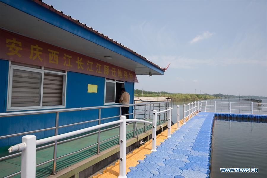 Photo taken on Aug. 7, 2018 shows Xijiang off-site conservation center of the finless porpoise nature reserve along the Yangtze River in Anqing City, east China\'s Anhui Province. The finless porpoise nature reserve, consisting of three core zones, six buffer zones and several experimental zones, has provided a safe habitat for some 200 finless porpoises, since being set up in 2017. (Xinhua/Jin Liwang)