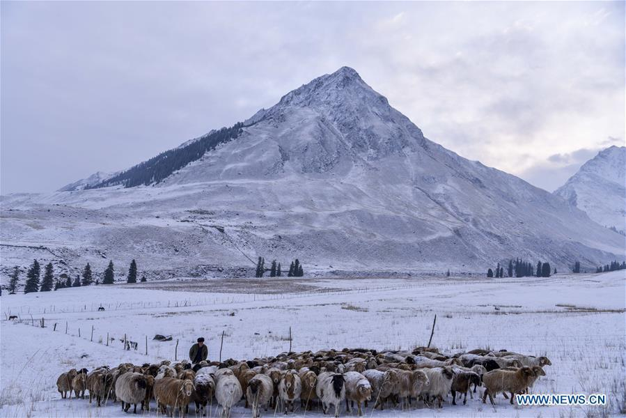 Photo taken on Jan. 16, 2018 shows the view of a pasture in winter in Zhaosu County, northwest China\'s Xinjiang Uygur Autonomous Region. China\'s westernmost Xinjiang Uygur Autonomous Region welcomed a record high of 107 million tourists in 2017, up 32.4 percent year on year. In addition, tourists spent over 182 billion yuan (28.4 billion U.S. dollars) in Xinjiang last year, 30 percent more than in 2016. (Xinhua/Hu Huhu)