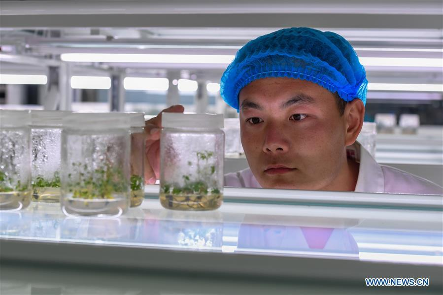 A researcher checks plants for sandy soil at Elion Resources Group in Erdos, north China\'s Inner Mongolia Autonomous Region, July 11, 2018. Kubuqi, the seventh largest desert in China, is a good example of China\'s success in alleviating desertification. About 6,460 square kilometers of the Kubuqi desert has been reclaimed in the last 30 years. (Xinhua/Peng Yuan)