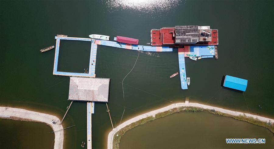 Aerial photo taken on Aug. 7, 2018 shows Xijiang off-site conservation center of the finless porpoise nature reserve along the Yangtze River in Anqing City, east China\'s Anhui Province. The finless porpoise nature reserve, consisting of three core zones, six buffer zones and several experimental zones, has provided a safe habitat for some 200 finless porpoises, since being set up in 2017. (Xinhua/Jin Liwang)