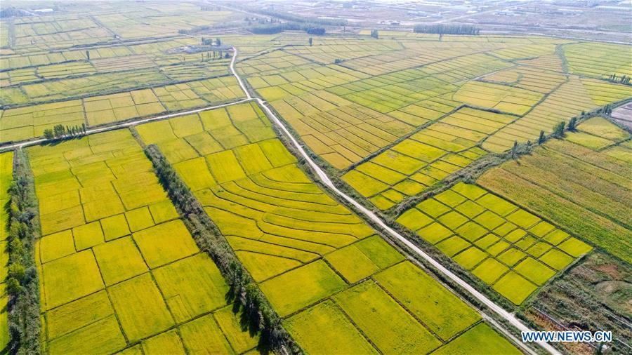 Aerial photo taken on Sept. 8, 2017 shows the rice fields at Suhuo\'er Village in Qapqal Xibe Autonomous County, northwest China\'s Xinjiang Uygur Autonomous Region. China\'s westernmost Xinjiang Uygur Autonomous Region welcomed a record high of 107 million tourists in 2017, up 32.4 percent year on year. In addition, tourists spent over 182 billion yuan (28.4 billion U.S. dollars) in Xinjiang last year, 30 percent more than in 2016. (Xinhua/Hu Huhu)