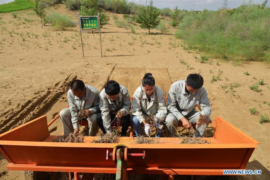 Technicians work at an plantation area at the Kubuqi Desert, north China\'s Inner Mongolia Autonomous Region, July 24, 2018. Kubuqi, the seventh largest desert in China, is a good example of China\'s success in alleviating desertification. About 6,460 square kilometers of the Kubuqi desert has been reclaimed in the last 30 years. (Xinhua/Lu Ye)