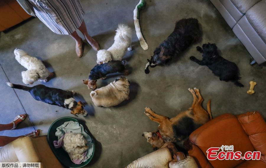 Dogs are seen at the association \