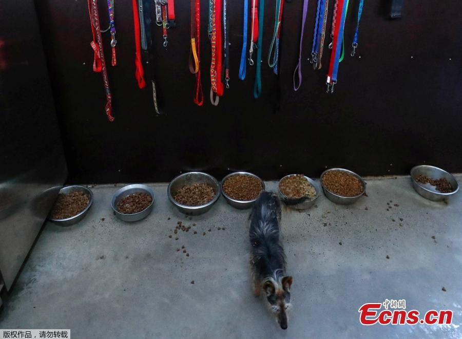 A dog is seen at the association \