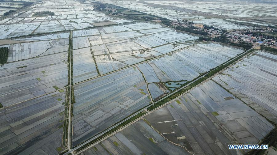 Aerial photo taken on May 21, 2018 shows the road next to fields in Qapqal Xibe Autonomous County, northwest China\'s Xinjiang Uygur Autonomous Region. As an important link of the Silk Road Economic Belt, Xinjiang is speeding up the development of transportation and logistics to connect east and west. By the end of 2017, the total length of roads in Xinjiang reached 186,000 km, with 4,578 km of expressways. (Xinhua/Hu Huhu)