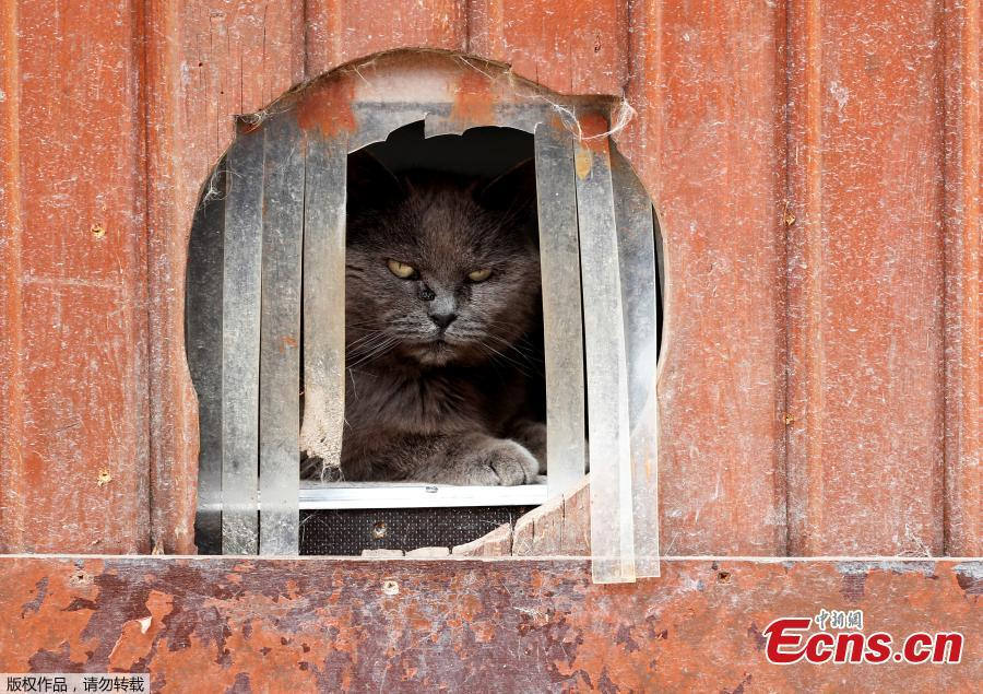 Calin, a European cat, is seen at the association \