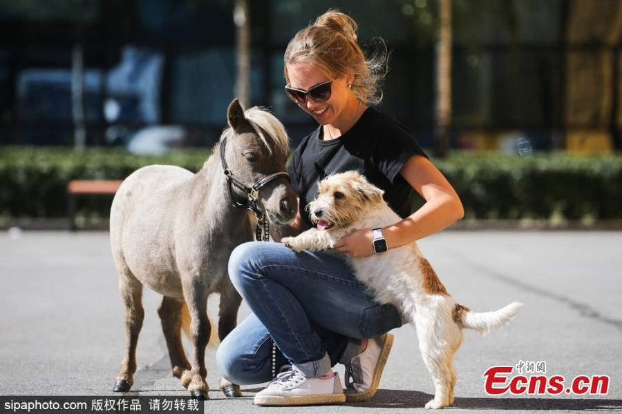 Owner Elena Chistyakova couldn\'t believe how small the foal was when he was born and described Gulliver\'s birth as a \'miracle\'. (Photo/Agencies)