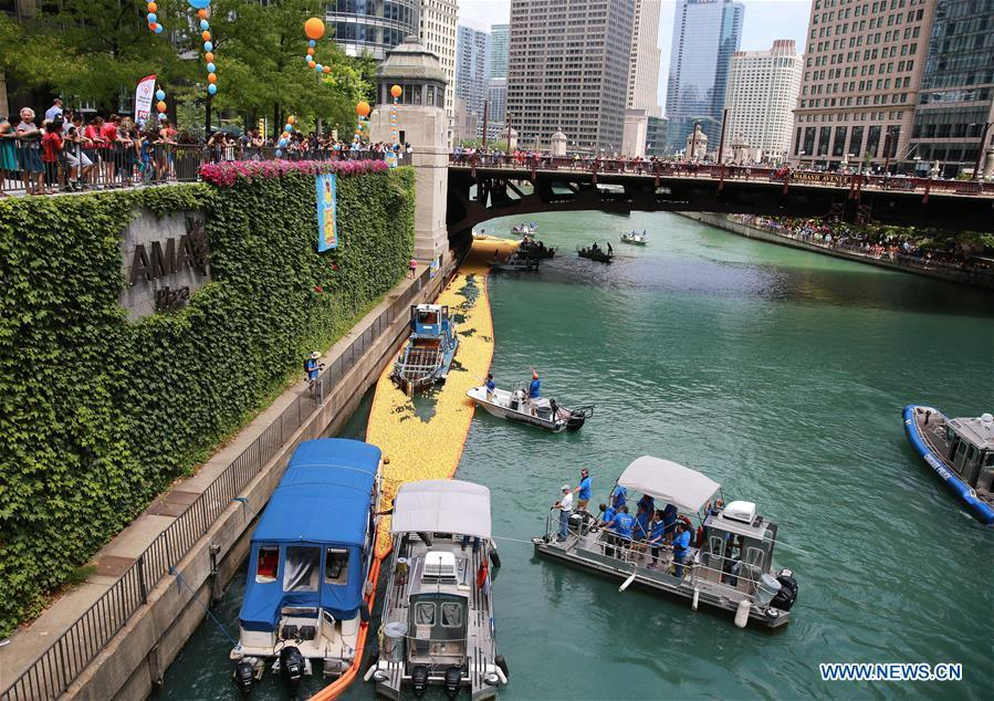 Volunteers recover rubber ducks from the Chicago River following the 13th Annual Chicago Ducky Derby in Chicago, the United States, Aug. 9, 2018. Derby organizers dropped about 60,000 rubber ducks into the Chicago river on Thursday to start the Rubber Ducky Derby this year, which helps raise money for Special Olympics Illinois. (Xinhua/Wang Ping)
