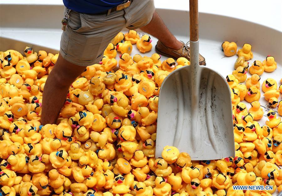A volunteer recovers rubber ducks from the Chicago River following the 13th Annual Chicago Ducky Derby in Chicago, the United States, Aug. 9, 2018. Derby organizers dropped about 60,000 rubber ducks into the Chicago river on Thursday to start the Rubber Ducky Derby this year, which helps raise money for Special Olympics Illinois. (Xinhua/Wang Ping)