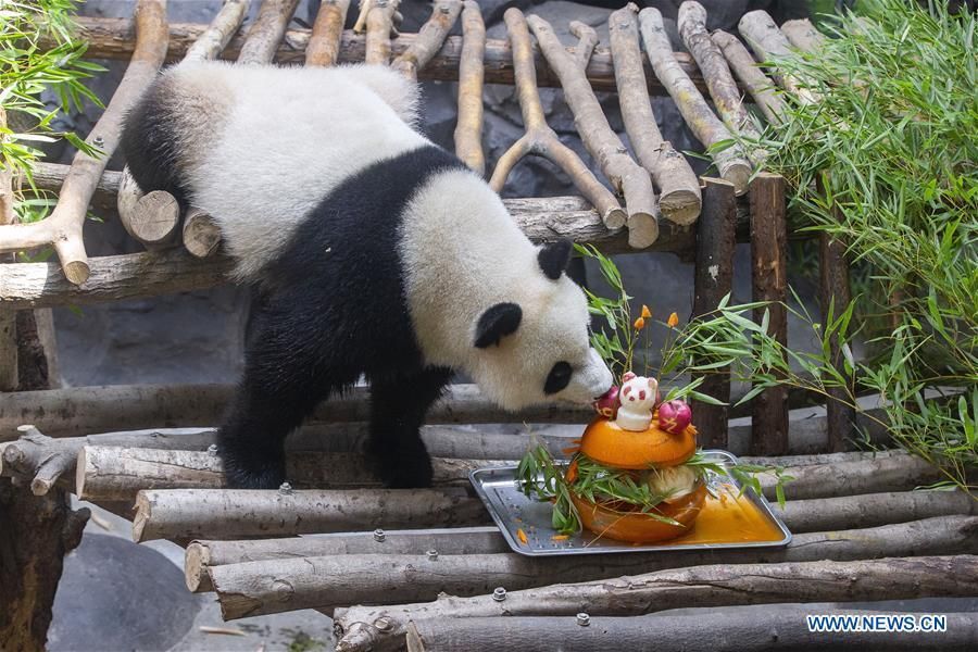 A giant panda twin eats birthday cake in an air-conditioned room at the Nanjing Hongshan Forest Zoo in Nanjing, capital of east China\'s Jiangsu Province, Aug. 10, 2018. Staff workers at the zoo celebrated the 3rd birthday anniversary for the female giant panda twins \