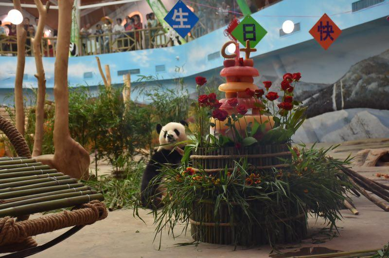 The giant panda Sijia celebrated its 12th birthday with more than 2,000 fans from all around the country at the Yabuli ski resort in Northeast China\'s Heilongjiang Province on Sunday. The female panda received two carefully prepared presents from its keepers: a steel rocking chair and a 1.8-meter-high birthday cake with Sijia\'s favorite fruits.  (Photo provided to chinadaily.com.cn)