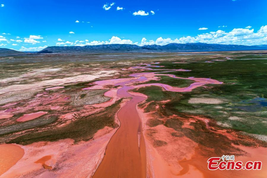 A photo taken by a drone shows a stunning view of Alag Lake in Dulan County, Northwest China's Qinghai Province. The lake, with an average elevation of 4,099 meters, is a major inland lake in the upper reaches of the Qaidam River and also an important habitat for wildlife. The river channels formed by the melting of snow and ice in the mountains creates spectacular scenes. (Photo: China News Service/Chai Dicheng)