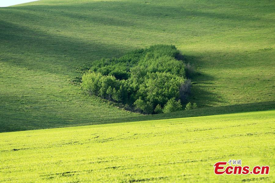 <?php echo strip_tags(addslashes(File photo shows a heart-shaped woods.(Photo/VCG))) ?>