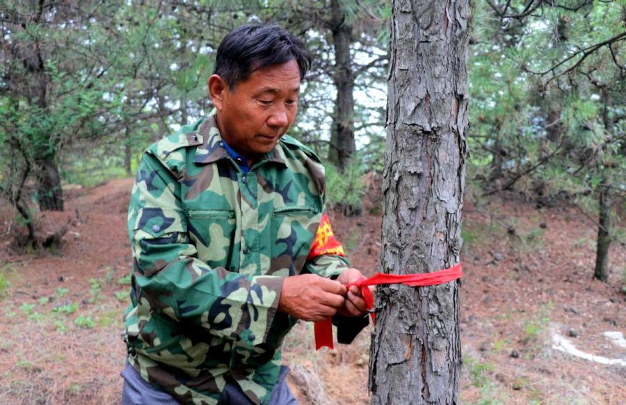 Zhong Sheng, a forest ranger, marks a tree on the Loess Plateau. (WANG HONG/FOR CHINA DALIY)