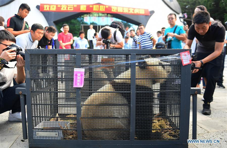 Journalists take photos of giant pandas Chu Xin and Mu Yun in Changchun, capital of northeast China\'s Jilin Province, Aug. 21, 2018. Chu Xin and Mu Yun, two 2-year-old female giant pandas, on Tuesday left the Dujiangyan base of China Conservation and Research Center for Giant Panda in Sichuan and arrived at the panda enclosure of the Siberian Tiger Park in Changchun. The pandas will meet the public on Aug. 24. (Xinhua/Lin Hong)