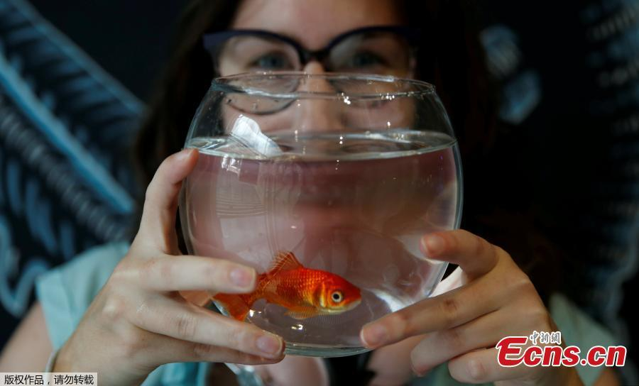 Emie Le Fouest from Paris brings her goldfish named \