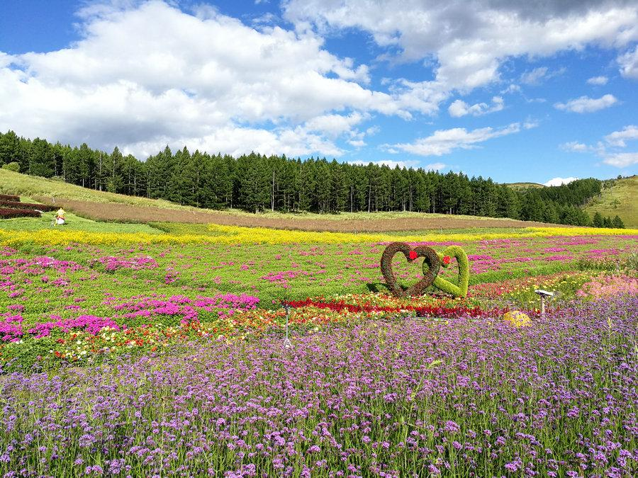 Beautiful flowers in Aershan National Forest Park, in the south part of the Greater Hinggan Mountains of the Inner Mongolia autonomous region on Aug. 22, 2018. (Photo provided to chinadaily.com.cn)