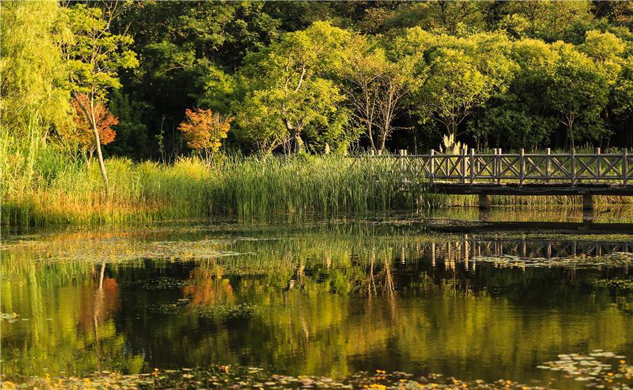 The natural beauty inside Huaihe River Ecological Park in Huai\'an, East China\'s Jiangsu Province, on Aug. 23, 2018. (Photo by Zhao Qirui/Asianewsphoto)