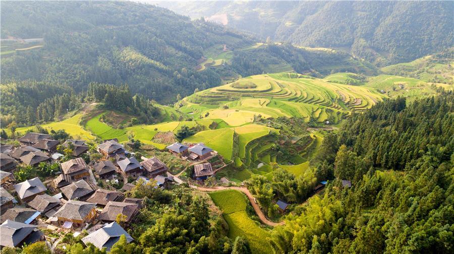 Terraced rice fields transform into greenish golden land in Congjiang county, Southwest China\'s Guizhou Province, Aug. 21, 2018. (Photo/Asianewsphoto)