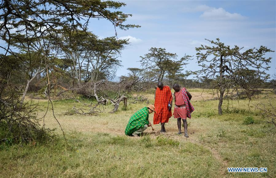 Chinese wildlife conservationist Zhuo Qiang (L) checks animal footprints with local wardens at Ol Kinyei conservancy in Maasai Mara, Kenya, July 9, 2018. The founder and Chairman of Mara Conservation Fund (MCF) Zhuo Qiang, a 45-year-old Chinese, has pioneered outstanding wildlife conservation projects in the world famous Maasai Mara ecosystem. Ol Kinyei is among the conservancies benefiting from his activities. Around it, he has built three lion proof boas preventing the wildlife conflict with the adjacent communities. He was officially adopted as a son of the Maasai\'s Ol Kinyei conservation group in 2015, owing to his unwavering friendship with the pastoralists. Zhuo\'s anti-poaching drives in the East African nation expresses the increasing collaboration between Kenyan and China in ending the killing of rhinos, elephants and lions. (Xinhua/Lyu Shuai)