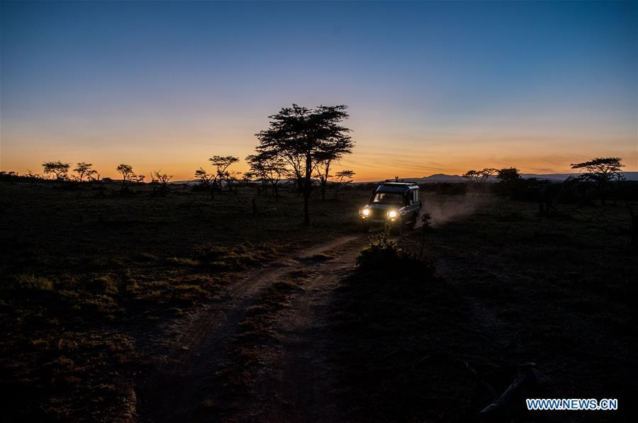 Chinese wildlife conservationist Zhuo Qiang and a local warden set off early in the morning to check the Ol Kinyei conservancy in Maasai Mara, Kenya, July 7, 2018. The founder and Chairman of Mara Conservation Fund (MCF) Zhuo Qiang, a 45-year-old Chinese, has pioneered outstanding wildlife conservation projects in the world famous Maasai Mara ecosystem. Ol Kinyei is among the conservancies benefiting from his activities. Around it, he has built three lion proof boas preventing the wildlife conflict with the adjacent communities. He was officially adopted as a son of the Maasai\'s Ol Kinyei conservation group in 2015, owing to his unwavering friendship with the pastoralists. Zhuo\'s anti-poaching drives in the East African nation expresses the increasing collaboration between Kenyan and China in ending the killing of rhinos, elephants and lions. (Xinhua/Lyu Shuai)