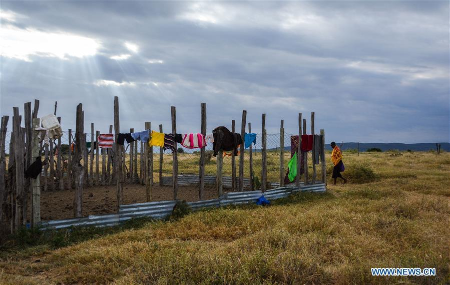 A man walks past lion proof fence built by Mara Conservation Fund (MCF) founded by Chinese wildlife conservationist Zhuo Qiang in Maasai Mara, Kenya, July 6, 2018. The founder and Chairman of Mara Conservation Fund (MCF) Zhuo Qiang, a 45-year-old Chinese, has pioneered outstanding wildlife conservation projects in the world famous Maasai Mara ecosystem. Ol Kinyei is among the conservancies benefiting from his activities. Around it, he has built three lion proof boas preventing the wildlife conflict with the adjacent communities. He was officially adopted as a son of the Maasai\'s Ol Kinyei conservation group in 2015, owing to his unwavering friendship with the pastoralists. Zhuo\'s anti-poaching drives in the East African nation expresses the increasing collaboration between Kenyan and China in ending the killing of rhinos, elephants and lions. (Xinhua/Lyu Shuai)