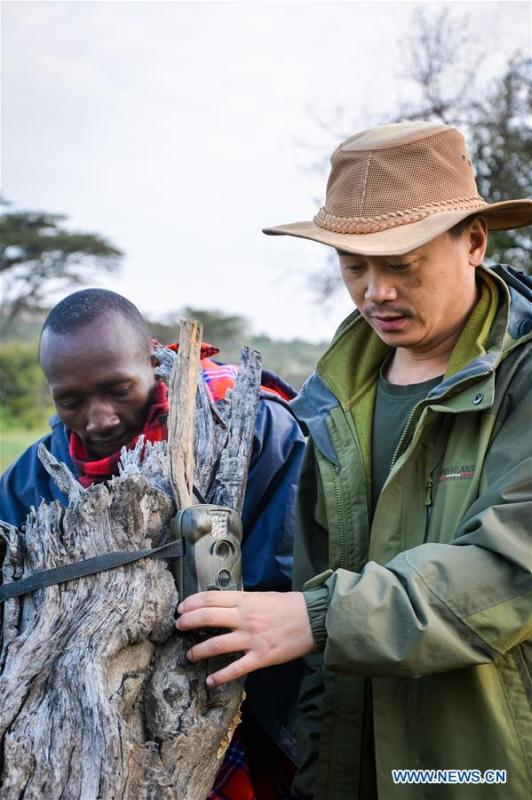 Chinese wildlife conservationist Zhuo Qiang (R) puts up a infrared-triggered camera at Ol Kinyei conservancy in Maasai Mara, Kenya, July 9, 2018. The founder and Chairman of Mara Conservation Fund (MCF) Zhuo Qiang, a 45-year-old Chinese, has pioneered outstanding wildlife conservation projects in the world famous Maasai Mara ecosystem. Ol Kinyei is among the conservancies benefiting from his activities. Around it, he has built three lion proof boas preventing the wildlife conflict with the adjacent communities. He was officially adopted as a son of the Maasai\'s Ol Kinyei conservation group in 2015, owing to his unwavering friendship with the pastoralists. Zhuo\'s anti-poaching drives in the East African nation expresses the increasing collaboration between Kenyan and China in ending the killing of rhinos, elephants and lions. (Xinhua/Lyu Shuai)
