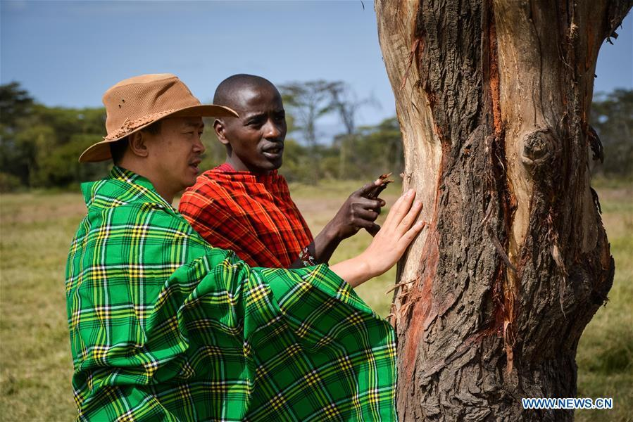 Chinese wildlife conservationist Zhuo Qiang (L) checks a tree damaged by elephants with a local warden at Ol Kinyei conservancy in Maasai Mara, Kenya, July 9, 2018. The founder and Chairman of Mara Conservation Fund (MCF) Zhuo Qiang, a 45-year-old Chinese, has pioneered outstanding wildlife conservation projects in the world famous Maasai Mara ecosystem. Ol Kinyei is among the conservancies benefiting from his activities. Around it, he has built three lion proof boas preventing the wildlife conflict with the adjacent communities. He was officially adopted as a son of the Maasai\'s Ol Kinyei conservation group in 2015, owing to his unwavering friendship with the pastoralists. Zhuo\'s anti-poaching drives in the East African nation expresses the increasing collaboration between Kenyan and China in ending the killing of rhinos, elephants and lions. (Xinhua/Lyu Shuai)