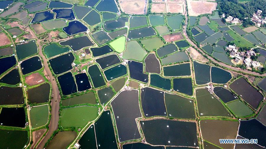 Aerial photo taken on Aug. 25, 2018 shows the view of shrimp culture ponds in Kangxiling Town in Qinzhou City, south China\'s Guangxi Zhuang Autonomous Region. (Xinhua/Zhang Ailin)