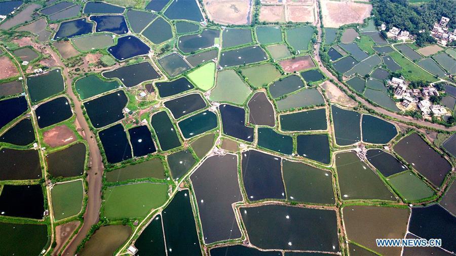 Aerial photo taken on Aug. 25, 2018 shows the view of shrimp culture ponds in Kangxiling Town in Qinzhou City, south China\'s Guangxi Zhuang Autonomous Region. (Xinhua/Zhang Ailin)
