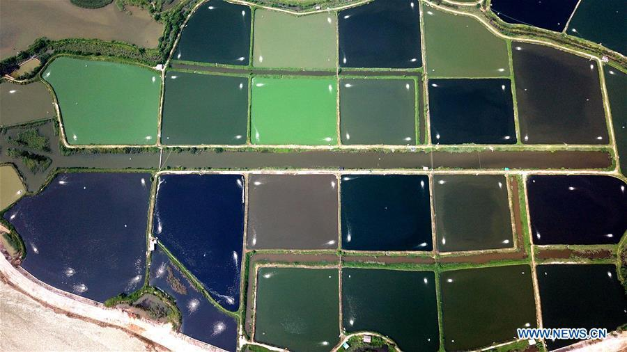 Aerial photo taken on Aug. 25, 2018 shows the view of shrimp culture ponds in Shafu Town in Qinzhou City, south China\'s Guangxi Zhuang Autonomous Region. (Xinhua/Zhang Ailin)