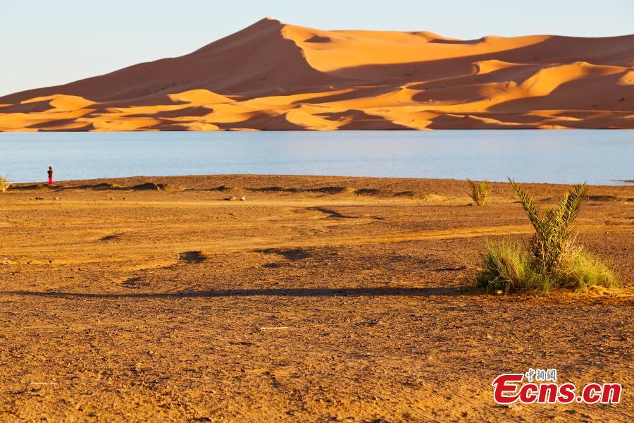 The Sahara Desert. (Photo provided to China News Service)