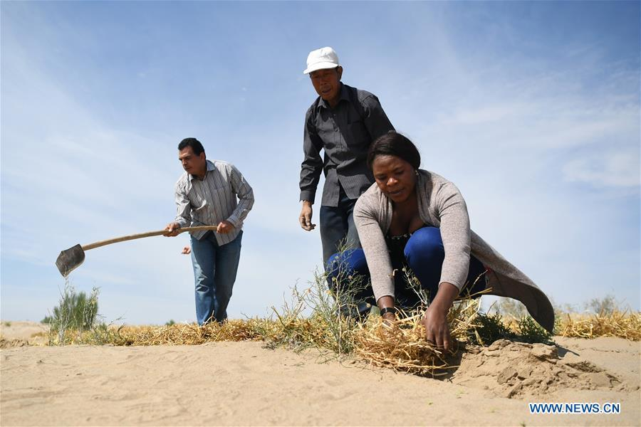 Nakanyala Elina Shekupe (1st R) learns desert control in Minqin County, northwest China\'s Gansu Province, Aug. 26, 2018. Shekupe, 37, is an agricultural technology official from Namibia. She and 11 other students are taking part in a desertification combating and ecological restoration training course organized by China\'s Ministry of Commerce in Gansu. \
