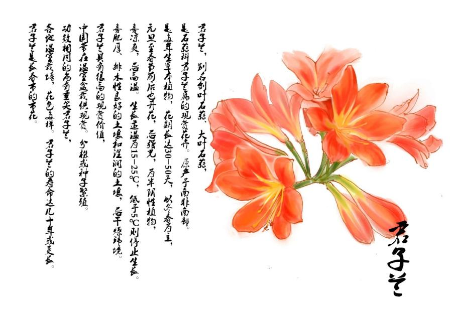 This drawing depicts orchid, the capital flower of Changchun. (Photo provided to chinadaily.com.cn)