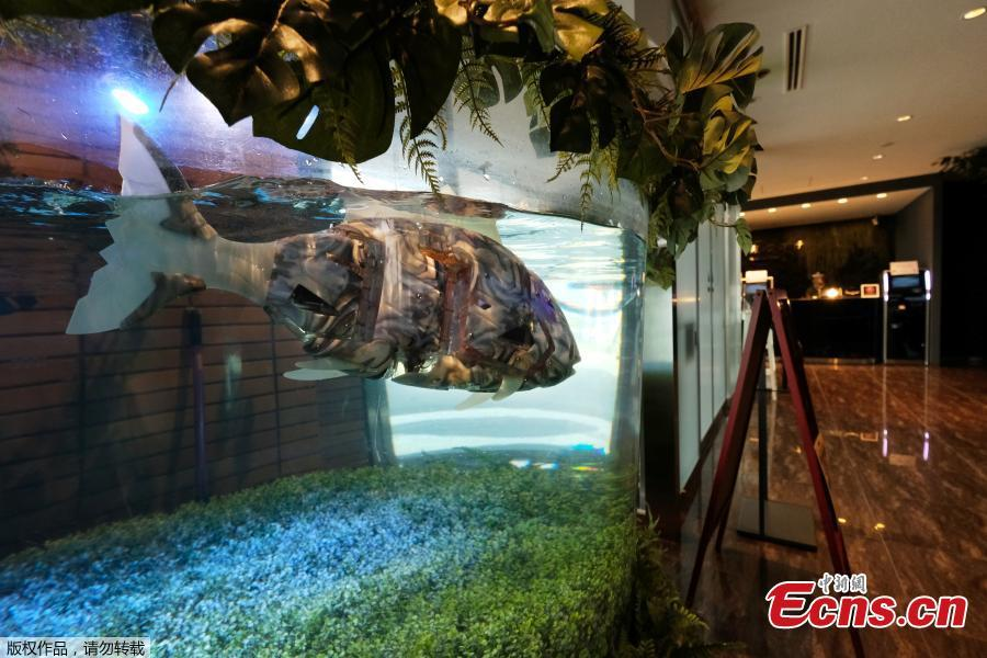 Robotic fish swim in a tank in the lobby of the Henn na Hotel Maihama Tokyo Bay in Urayasu, Chiba, Japan, Aug. 31, 2018. Multilingual dinosaur robot at the front desk will do check-in / check-out procedures as the hotel aims to offer comfortable stay by utilizing various advanced technologies. The name is a play on a Japanese word meaning strange. (Photo/Agencies)