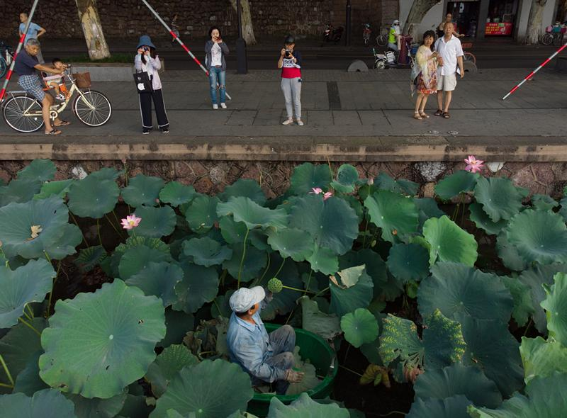 Chen Laidi, a Hangzhou native, gathers lotus leaves and heads at the West Lake. (Photo/China Daily)  It has no address, no signs, no exact opening hours, or even any salespeople, and sells just two things-tablecloth-sized lotus leaves and lotus heads filled with the plant\'s edible seeds, all handpicked from West Lake by its maintenance team.  The market revolves around the working schedule of the maintenance workers, and it handles the lotus harvest they reap from the lake, which is usually sufficient for the purchases of 30 people on any day.  Having been around for almost as long as Taobao, which launched in 2002, the market remains mostly a secret among locals.  Those who know about it are prepared to get up as early as 3am and travel for an hour across the city to visit the market. The attraction, they say, is the \