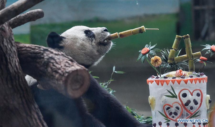 <?php echo strip_tags(addslashes(Giant panda Yuan Yuan enjoys a special birthday cake at Taipei Zoo in Taipei, southeast China's Taiwan, Aug. 30, 2018. Born two days later than Yuan Yuan in 2004, giant panda Tuan Tuan also celebrated its 14th birthday together with Yuan Yuan on Thursday. Yuan Yuan and Tuan Tuan were given as a goodwill gift to Taiwan by the Chinese mainland. (Xinhua/Xue Yubin))) ?>
