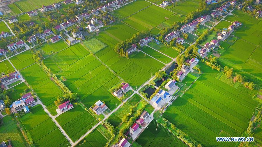 Photo taken on Aug. 23, 2018 shows the scenery of villages in Xiayuan Town in Rugao, east China\'s Jiangsu Province. (Xinhua/Xu Congjun)