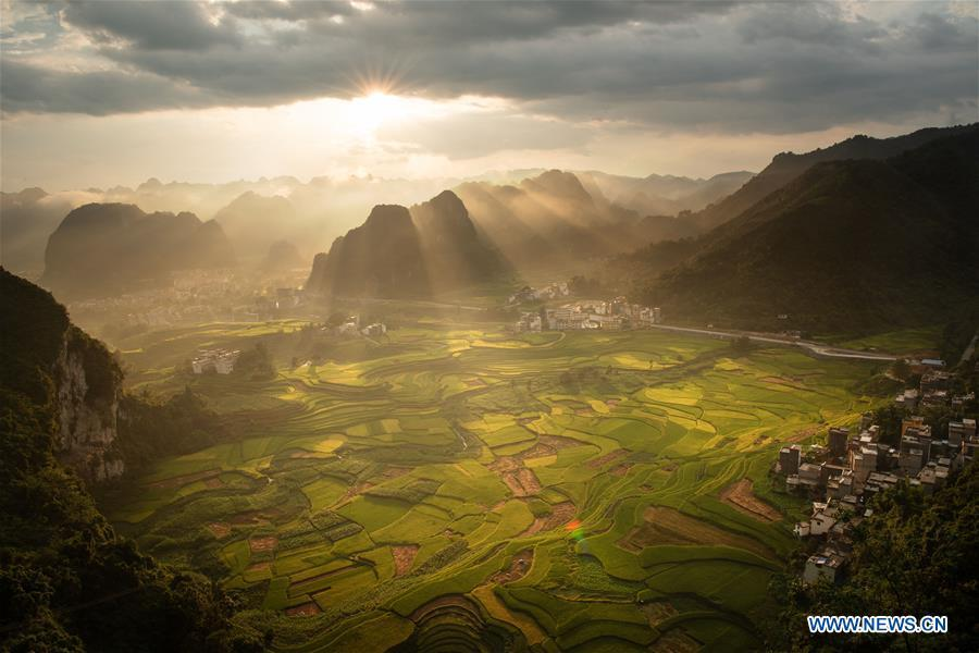 Photo taken on Aug. 29, 2018 shows the terraced fields surrounded by mountains in Simeng Township of Donglan County in Hechi, south China\'s Guangxi Zhuang Autonomous Region. (Xinhua/Ma Fangkang)