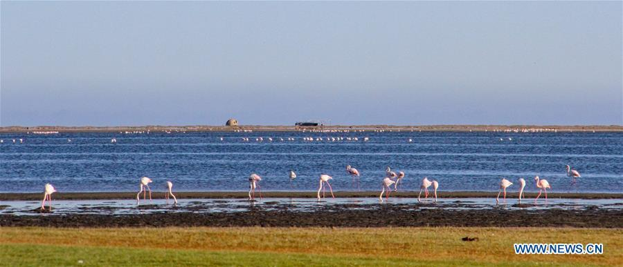 Flamingos stay at lagoon in Walvisbay, port city of Namibia on Aug. 5, 2018. (Xinhua/Wu Changwei)