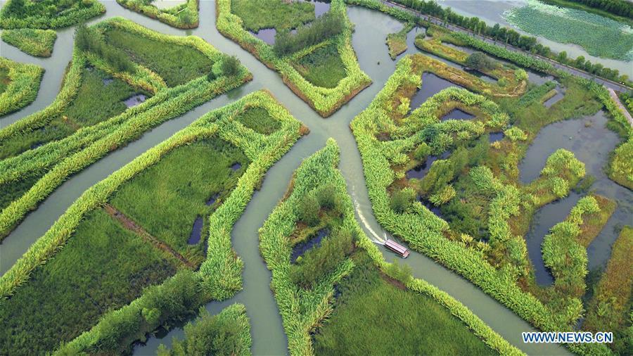 Aerial photo taken on Sept. 1, 2018 shows an early autumn scenery of the Hongze Lake wetland in Sihong County, east China\'s Jiangsu Province. (Xinhua/Xu Congjun)