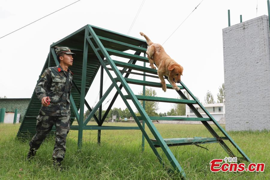 Armed police officer Han Menglin spends his last moments with a police dog at a training base before ending his military service in Guizhou Province, Aug. 31, 2018. (Photo: China News Service/Qu Honglun)